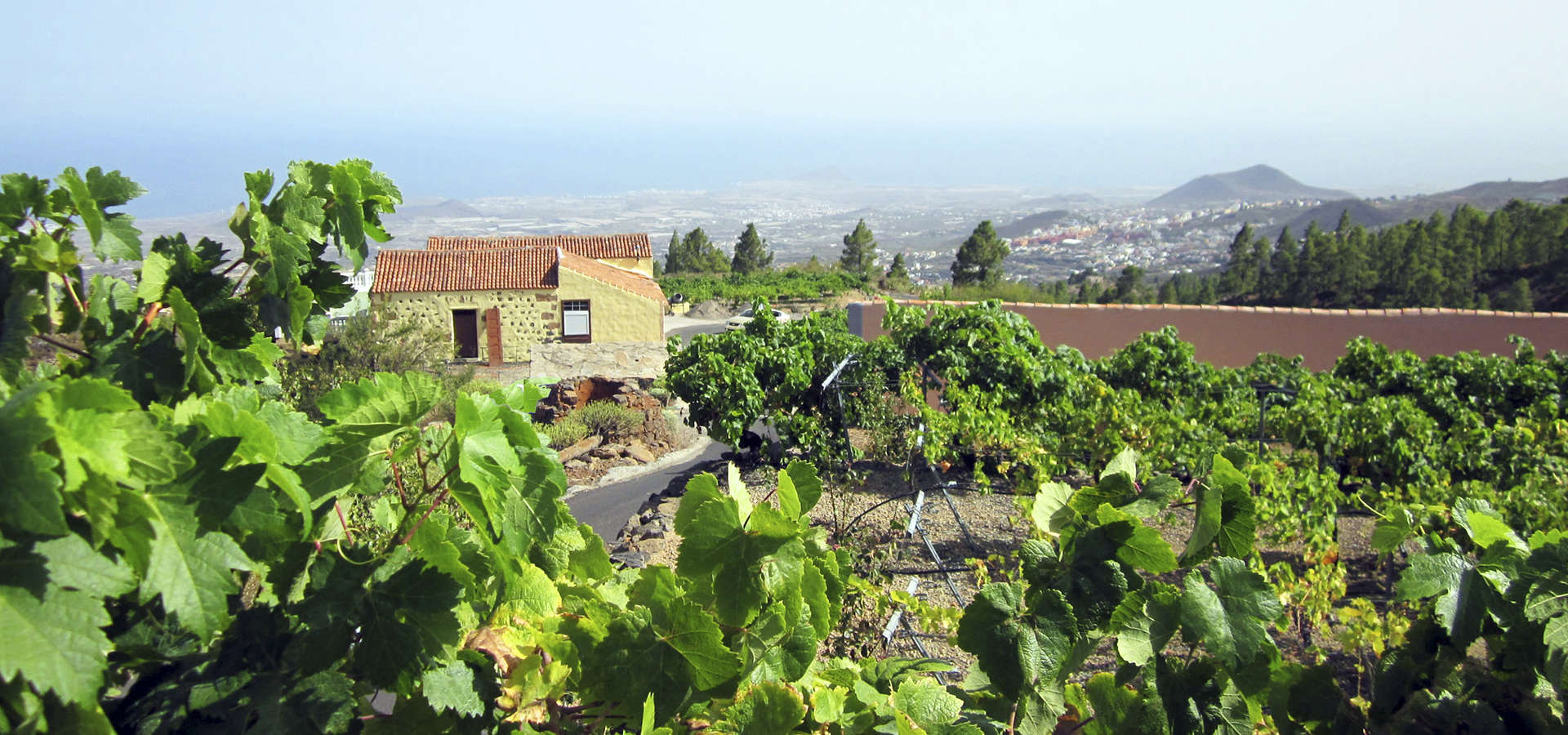 727. Finca with three houses in Granadilla de Abona